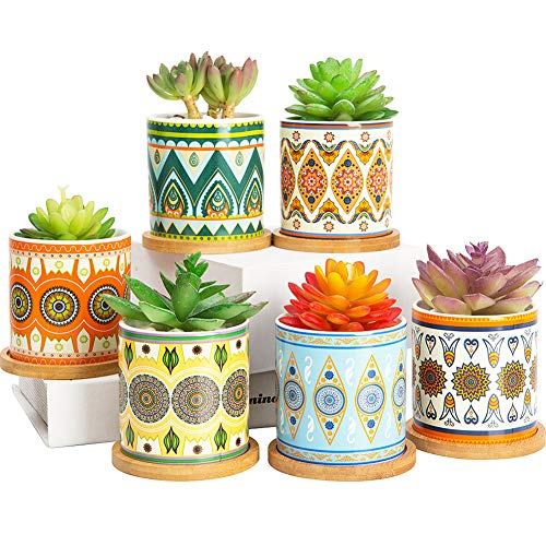 COLOAPT Succulent Plant Pots - 3.1 inch Ceramic Succulent Planter -Cylinder Flower Pots for Cactus with Drainage Hole and Bamboo Tray, 6 Pack