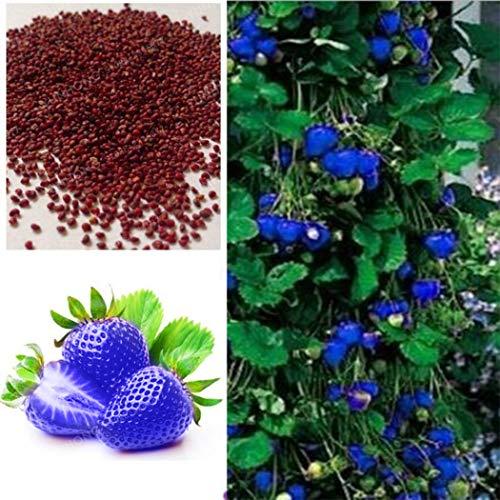 nulala 100 Pz Blu Arrampicata Semi di Fragola Semi di Albero Molto Delicious Semi di Frutta Per La Casa Giardino