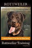 Rottweiler Training, Dog Care, Dog Behavior, for Rottweiler Dogs & Rottweiler Puppies By D!G THIS DOG Training, Dog Training Begins From the Car Ride Home, Rottweiler Training