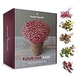RUBYLICIOUS ASIA Kit de Cultivo de MICROGREENS | Set de Jardinería con Semillas Germinadas Saludables para Cosechar los Brotes de Verduras y Hierbas en 2 Semanas