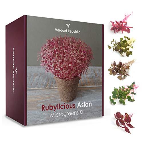 Kit de Micro-Pousses Salade asiatique Rubylicious | Cultiver votre propre SUPERFOOD | Graines à germer | Légumes et herbes faciles à cultiver | Récolte en 2 semaines | Cadeau parfait