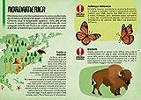 Zoom IMG-2 animali le specie a rischio