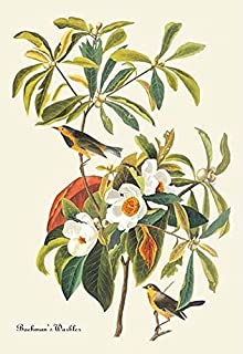 John James Audubon (1785-1851) was the premier naturalist and a well respected American ornithologist His attention to det...