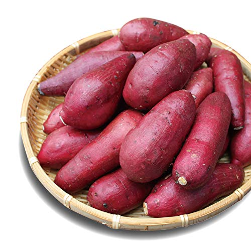 【新芋】紅はるか ベビーサイズ 5kg (4.5kg+保証分500g) 土付き 生芋 (130g以下のSS〜Sサイズ) 鹿児島県産 さつまいも べにはるか