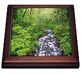3dRose Bridal Veil Creek, Columbia River Gorge, Mt. Hood National Forest. - Trivets (trv_332036_1)
