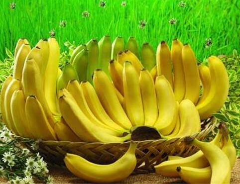 100 pcs Graines de bananes, arbres fruitiers nains, goût du lait, en plein air vivaces fruits semences pour les plantes de jardin 6