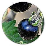 pomodoro nero (rarità), 50 semi