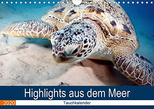 Highlights aus dem Meer - Tauchkalender (Wandkalender 2020 DIN A4 quer): Erleben Sie die farbenfrohe fantastische Welt unter Wasser! (Monatskalender, 14 Seiten ) (CALVENDO Tiere)