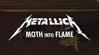 Moth Into Flame