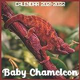 Baby Chameleon Calendar 2021-2022: April 2021 Through December 2022 Square Photo Book Monthly Planner Baby Chameleon, small calendar