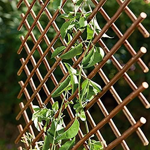 Celosias Para Jardín Catral Marca Catral