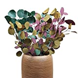 YWXKA Preservado verdaderas Naturales Hojas de eucalipto, Rama Helada del Color Ramo de Flores, hogar Decoración del Partido del Festival