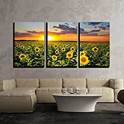 wall26 - 3 Piece Canvas Wall Art - Field of Blooming Sunflowers on a Background Sunset - Modern Home Decor Stretched and Framed Ready to Hang - 24x36x3 Panels