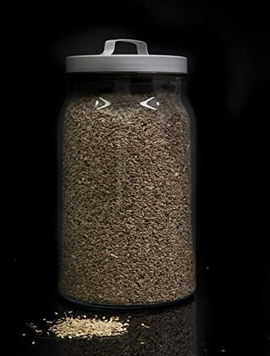 Hinojo semillas a granel - 1000 grs