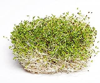Mejor Semillas De Alfalfa Para Germinar de 2020 - Mejor valorados y revisados