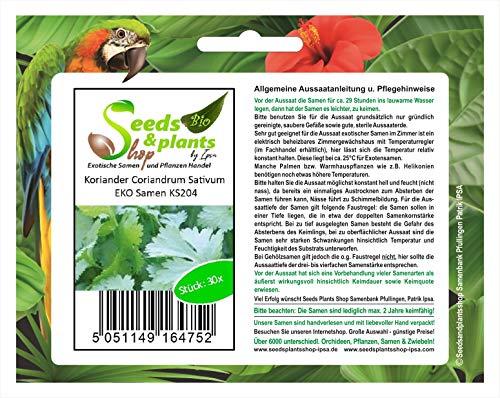 Stk - 30x Koriander Coriandrum Sativum Kräutersamen Saatgut Frisch Neuheit KS204 - Seeds Plants Shop Samenbank Pfullingen Patrik Ipsa