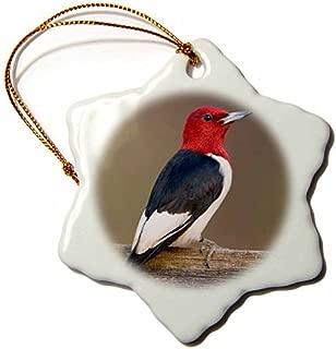 Best red headed bird illinois Reviews