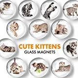 X-bet MAGNET Funny Glass Magnets for Refrigerator - Cat Decorative Magnets for Fridge and Whiteboard - Cute Fridge Magnets for Classroom, Office and Kitchen - Locker Magnets for Boys and Girls