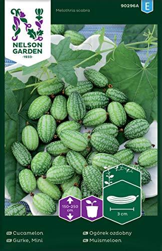 Nelson Garden 1933, Gurke, Mini, Samen (Einzelpackung)