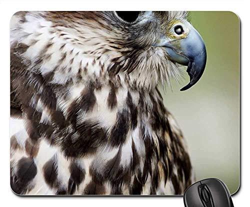Mauspad - Saker Falcon Falcon Falknerei Birds of Prey Show