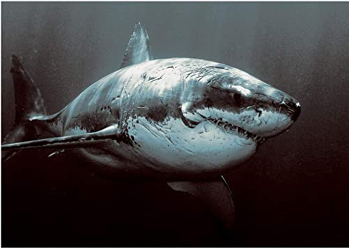ahorra hasta un 50% XIGZI 5D Pintura Bricolaje Bricolaje Bricolaje Bricolaje Punto de Cruz Bordado Tiburón Animales Imagen Decoración del Hogar Sin Marco  Envio gratis en todas las ordenes