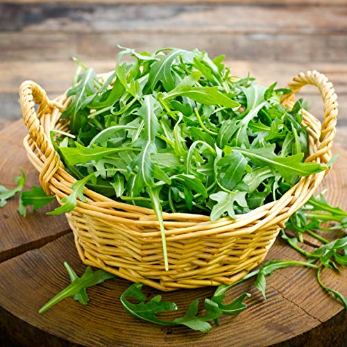 Gaea's Blessing Seeds - Arugula Seeds -2000 Seeds - Roquette Rocket Heirloom - Non-GMO Seeds with Easy to Follow Planting Instructions - 90% Germination Rate (Pack of 1)