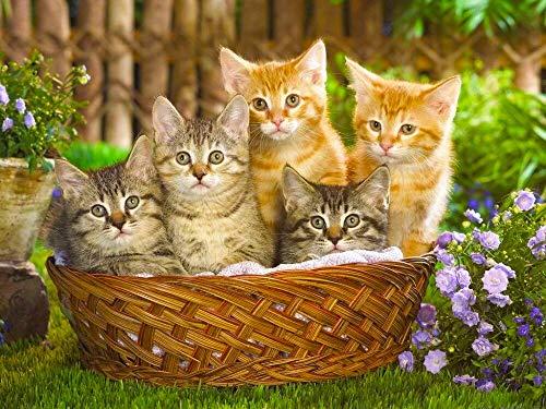 Mascota gato kit de punto de cruz bordado de diamantes animal imagen de diamantes de imitación decoración del hogar 5D kit de pintura de diamante hecho a mano A10 30x40cm