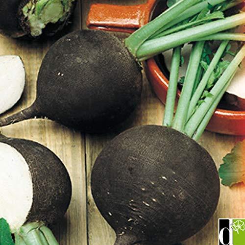 Risitar Graines - 100pcs Rare Radis noir gros rond d'hiver savoureuse, Graines de légumes résistante au froid