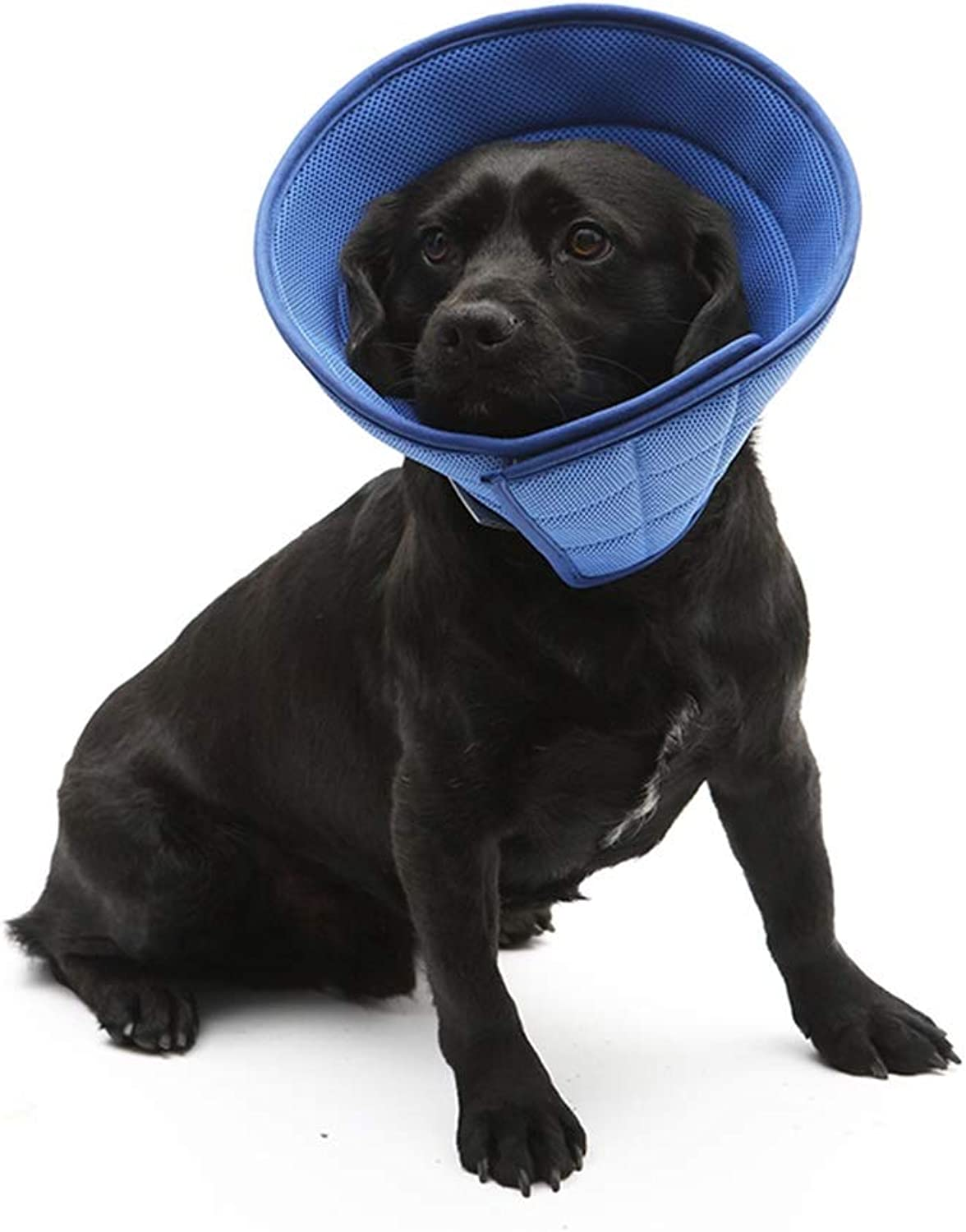 QIQIPET Soft Recovery Pet Cone Smart Collar, Lightweight Elizabethan Collar for Cats Dogs (color   bluee, Size   L)