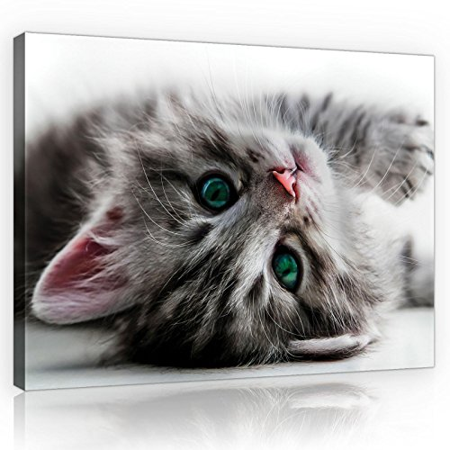 FORWALL Bilder Canvas Katze O4 (60cm. x 40cm.) Leinwandbilder Wandbild AMFPP10203O4