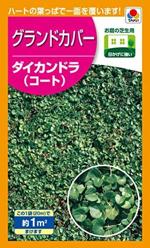 タキイ種苗(Takii Shubyo) グランドカバー ダイカンドラ(コート) 1�u BLG609EBF