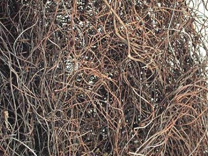 Natural Dried Angel Hair Vine Country Primitive Floral Craft Décor