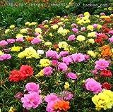 GEOPONICS SEMI: piretro di fiori bonsai fiore fiori stagioni in onda piante in vaso di facile impianto al coperto balcone y 20pcs: 6