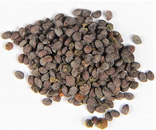 Ackerhellerkraut Thlaspi arvense 300 Samen