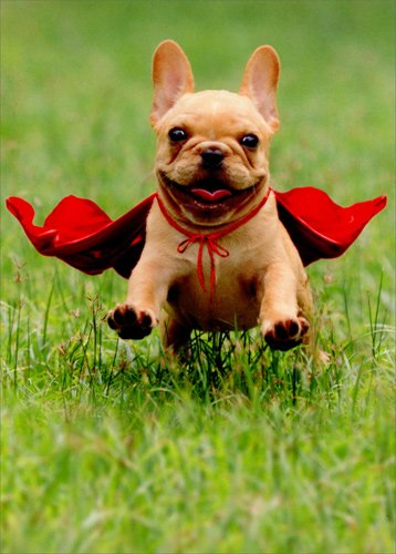 Frenchie Jumping Wearing Red Cape - Avanti Dog Thank You Card