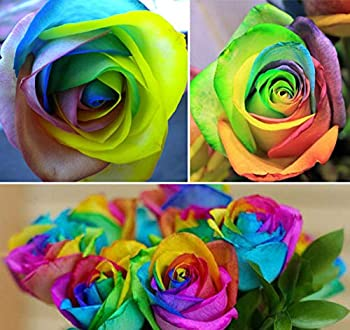 50+ Rare Multi Colorful Rainbow Rose Flower Seeds Beautiful Flower Potted Plant Home Garden