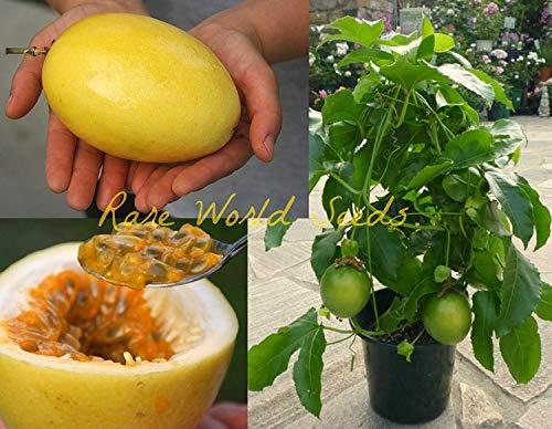 Vista Fruit de la Passion Jaune géant!(Passiflora Edulis VAR Flavicarpa) Graines