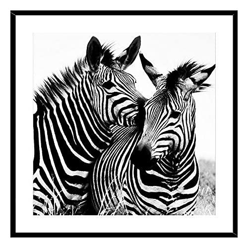 Cuadro Cristal (2 x 50 x 50 cm) Zebra
