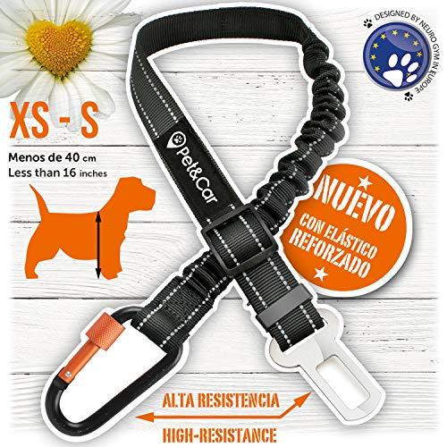PET & CAR Cinturón de Seguridad Extensible para arnés de Perro. Previene Lesiones de Mascota pequeña en Coche por su Correa elástica, mosquetón Resistente y Ligero con Cierre de Seguridad (XS - S)