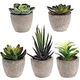 Yardwe Artificiale Succulente Piante in vasi Piante grasse finte pianta Artificiale da Interno Faux Succulente in Vaso per la Casa Decor (6 x 6 x 5 cm)