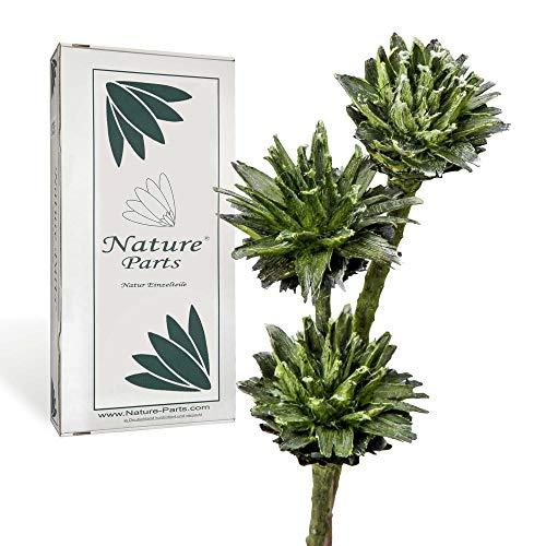 Nature Parts Leukospernum con Mango en Verde Helado (80 Unidades)