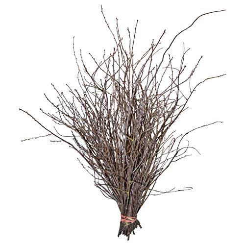 Dekozweig Kirschzweige-Bund (50, ca. 40-80 cm): frische Zweige   Dekoäste echt  Äste Kirschblüte   Osterdeko