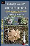 Seta de Cardo Vs Cardo Corredor: Asociación del hongo Pleurotus Eryngii y la planta Eryngium Campestre