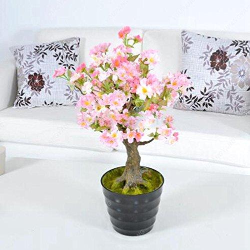 20 pcs graines de sakura bonsaïs ornement bonsaï cerise fleurs des plantes en pot facile à cultiver pour le bricolage jardin à la maison rouge plantation