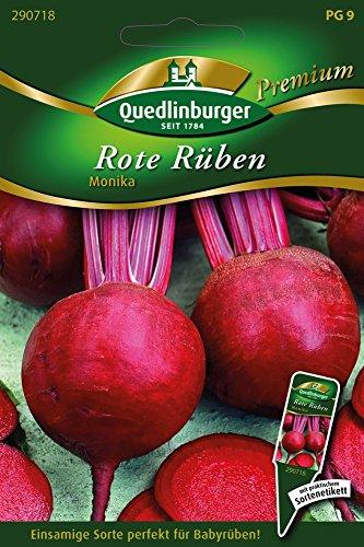 Rote Rüben Monika von Quedlinburger Saatgut
