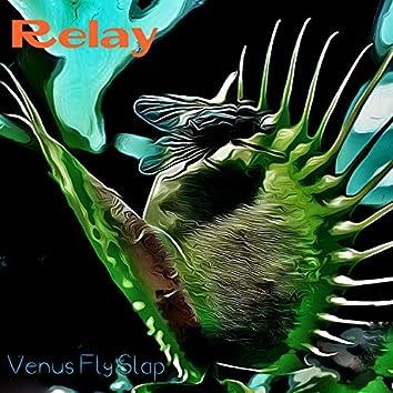 Venus Fly Slap
