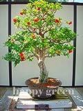 Granate Tree - Punica Granatum - 40 semillas - Perfecto para bonsái