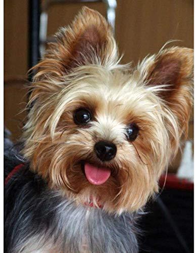 A-Generic DIY 5D Adorable Perro Animal Taladro Completo Cuadrado Diamante Resina Pintura Kit Dibujo de Diamantes de imitación para decoración de habitación-ZQF1081