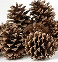 1KG Natural Fir Pine Austriaca Cones Florist Xmas Wreaths Garlands Wedding Christmas