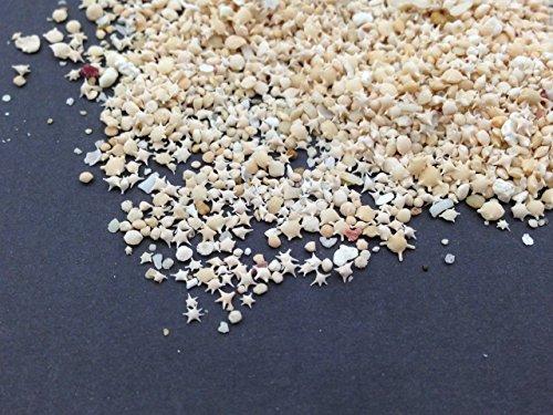 星の砂 星砂 たっぷり10g レジン 封入 材料 アクセサリーパーツ ピンクゴールド通販広場
